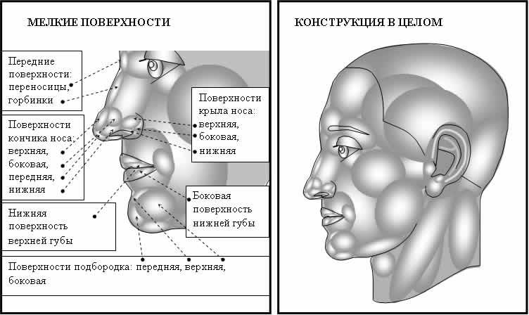 формы головы человека.